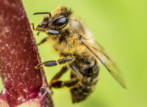 Find The Best Bee Removal Near Me