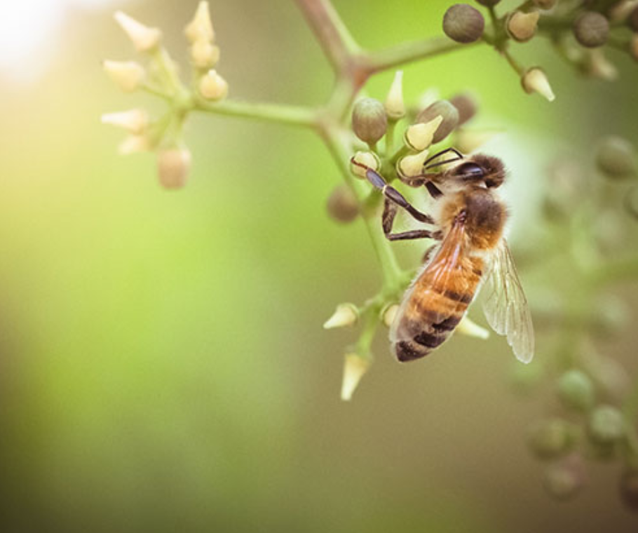 Tips For Bee Hive Removals.